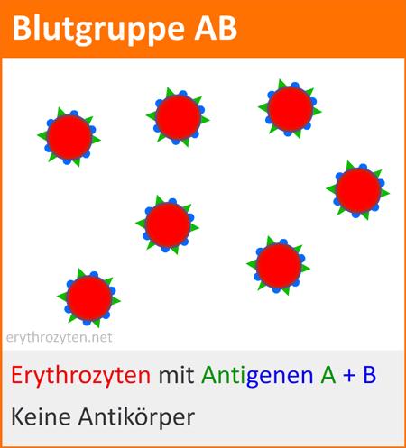 Blutgruppe AB