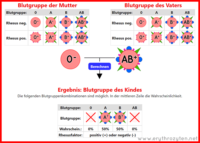 Blutgruppen-Rechner