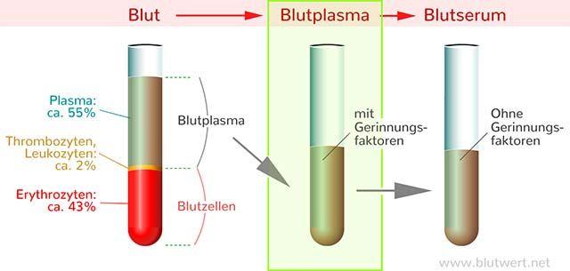 Blutplasma Bestandteile