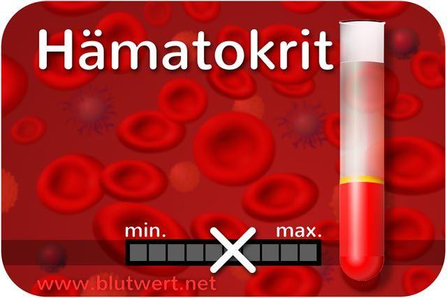 Blutwert Hkt