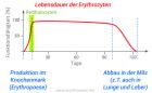 Erythrozyten Lebensdauer