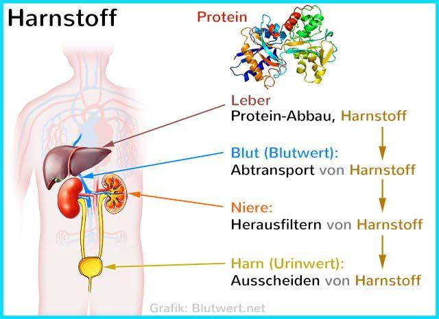 Harnstoff