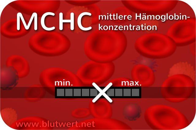 MCHC Blutwert