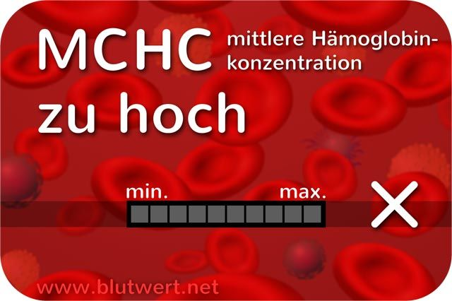 MCHC erhöht
