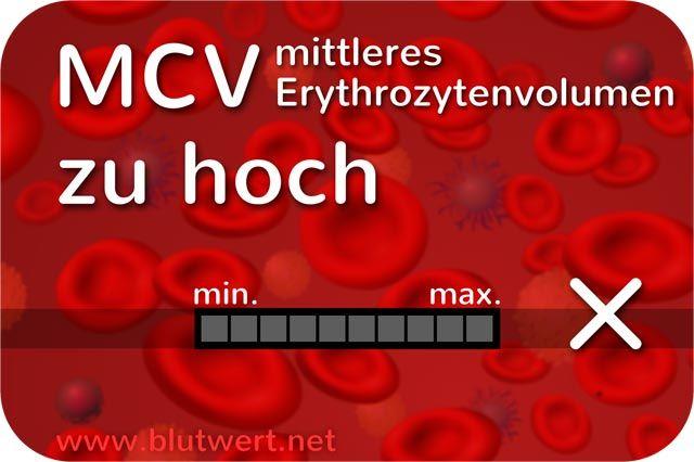 MCV Wert zu hoch