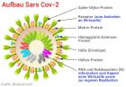 Coronavirus Aufbau