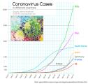 SARS CoV-2 (Coronavirus)