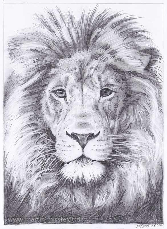 Bleistiftzeichnung Löwe