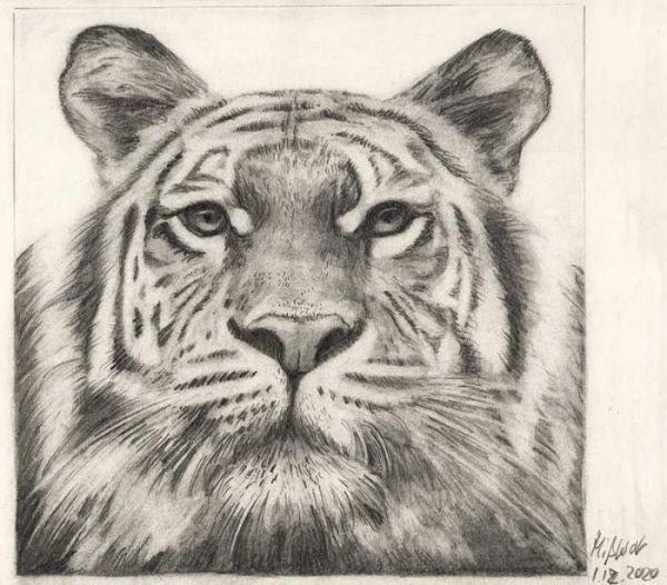 Tiger zeichnen