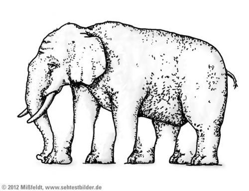 Elefant (5 Beine)