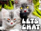 Süße Katzen