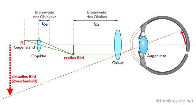 Mikroskop Strahlengang