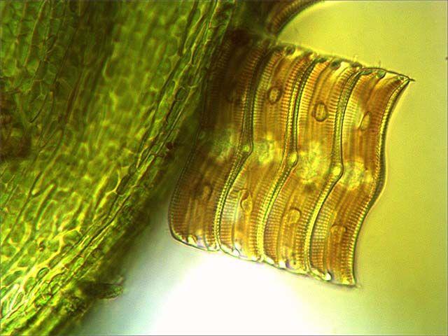 Mikroskop Bresser